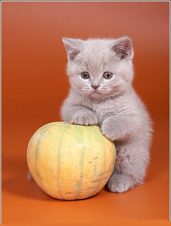 Подборочка очень милых котят (28 фото) .